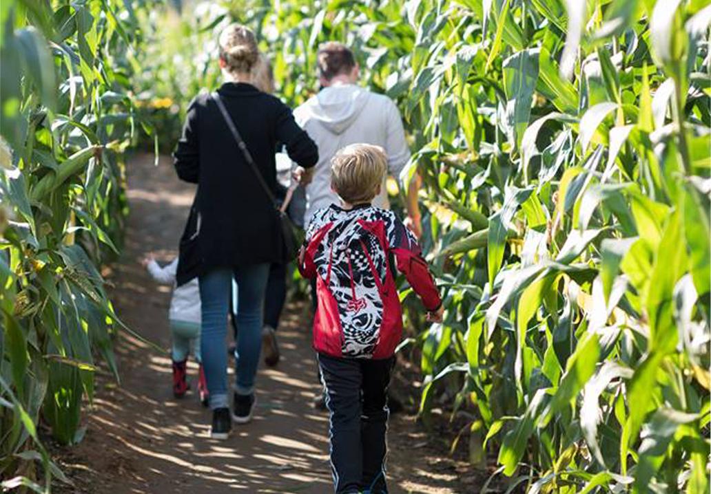 corn-maze-slider