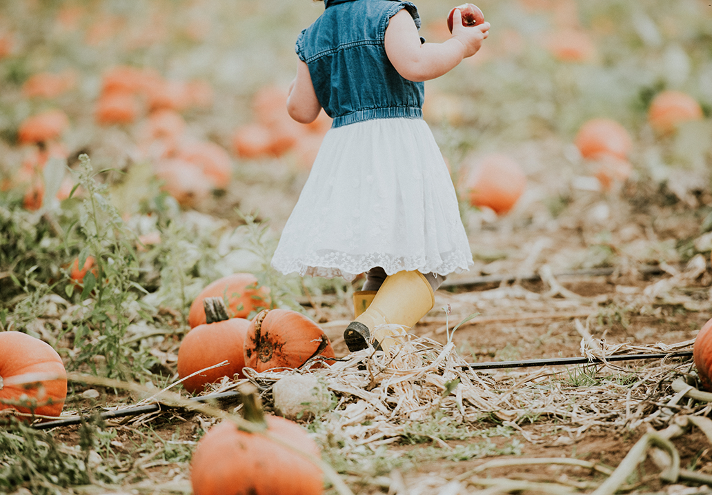 pumpkin-patch-slider