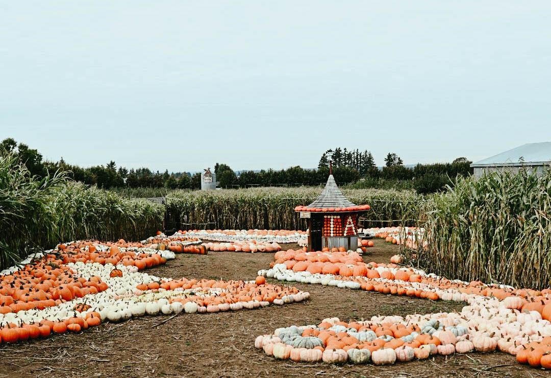 Pumpkin-Patch-Path